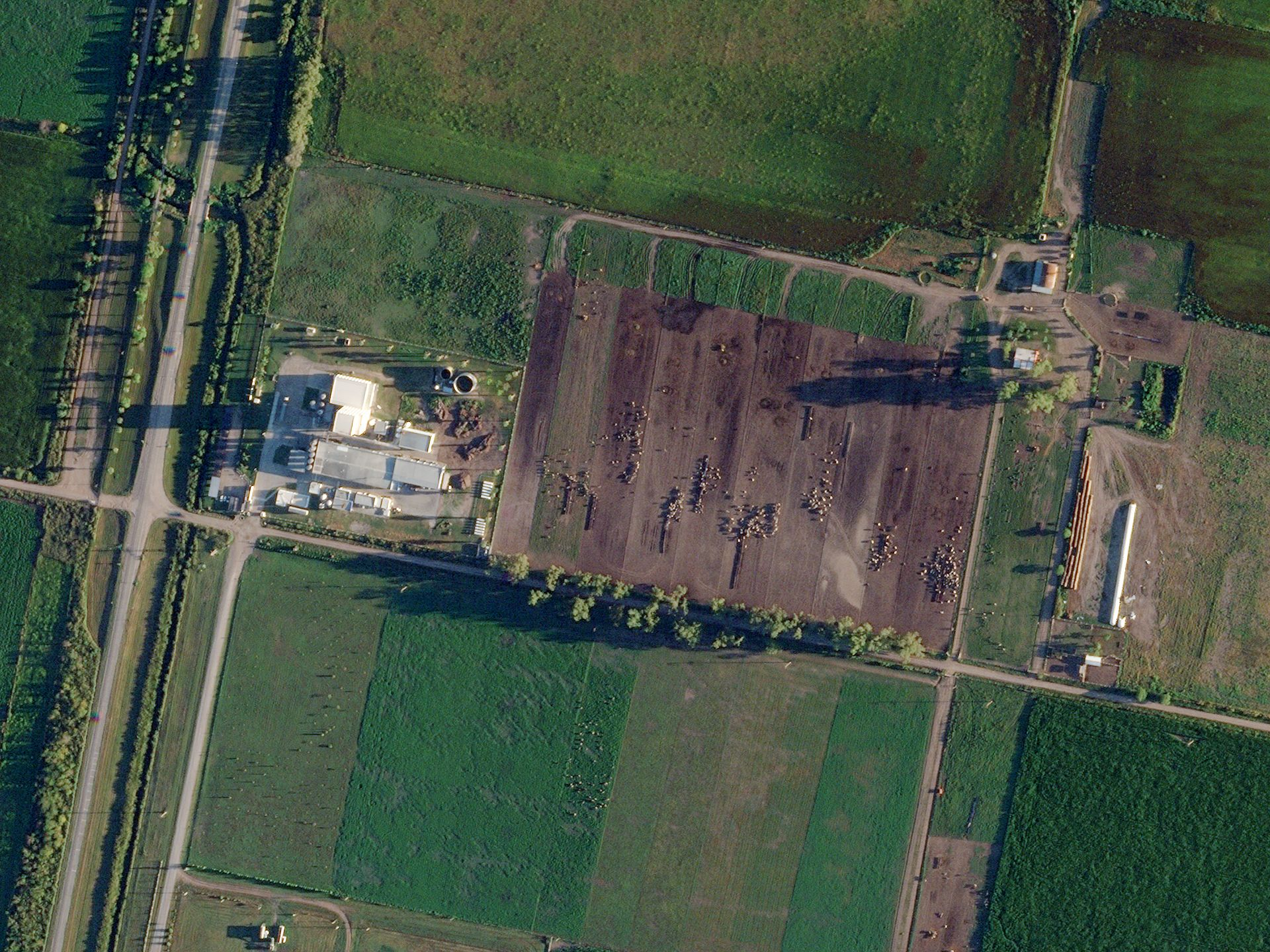Morning sunlight highlights individual livestock near the Lactear Dairy in Córdoba, Argentina. © 2021, Planet Labs Inc. All Rights Reserved.