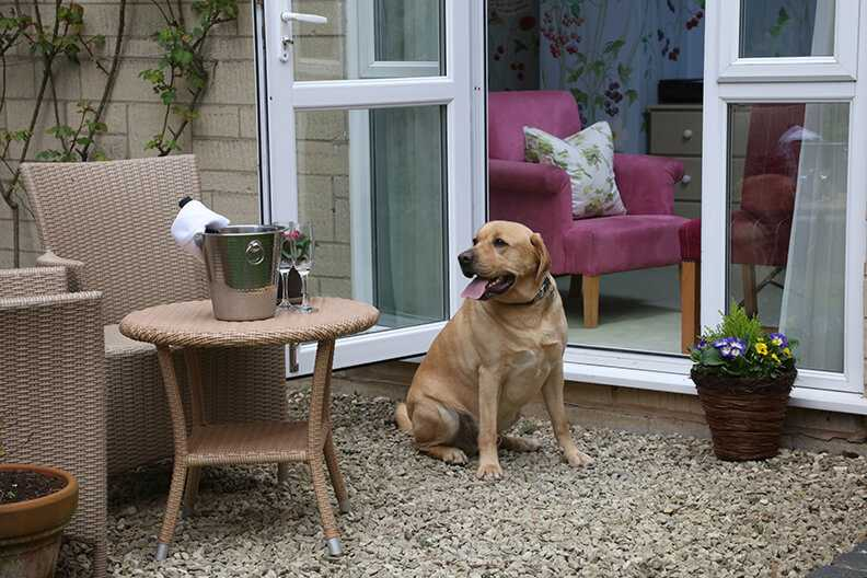dog friendly pub three ways house hotel