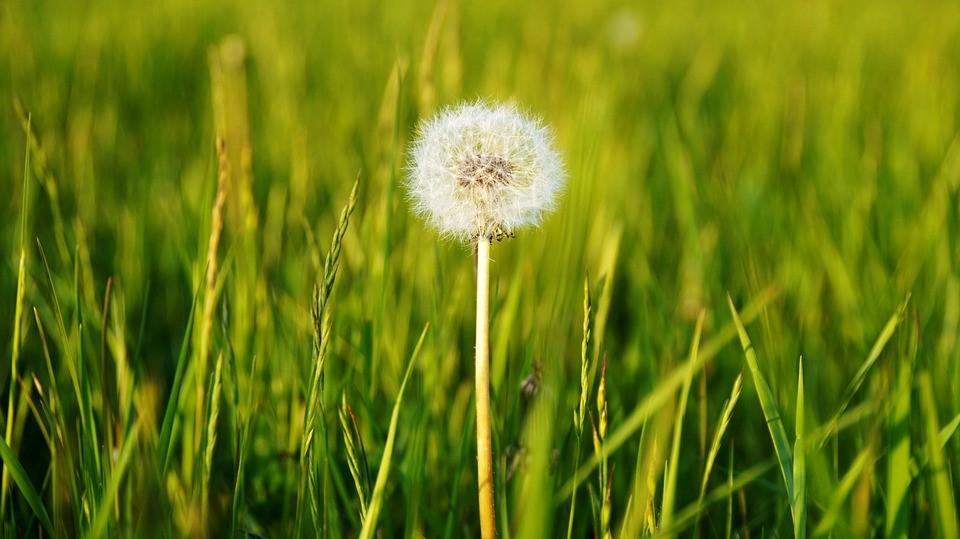 Flor en campo verde