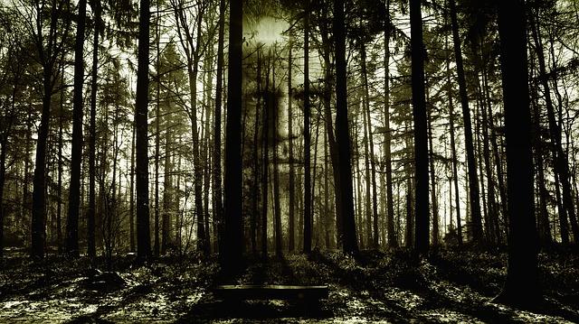 Bosque de miedo