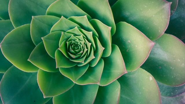 https://pixabay.com/es/verde-plantas-naturaleza-1747541/
