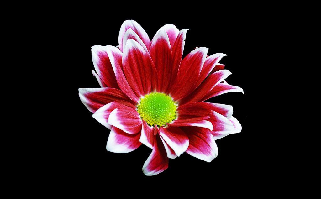https://pixabay.com/es/users/corgaasbeek-905824/