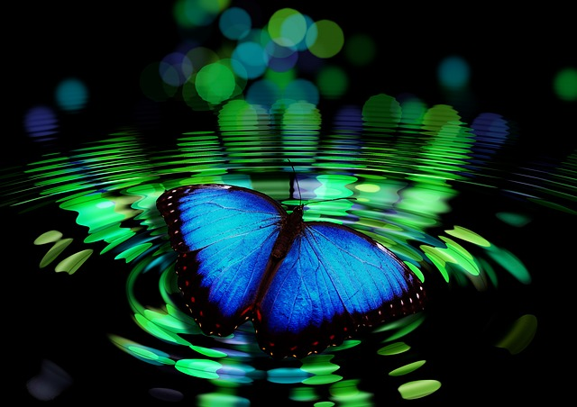 Mariposa en agua