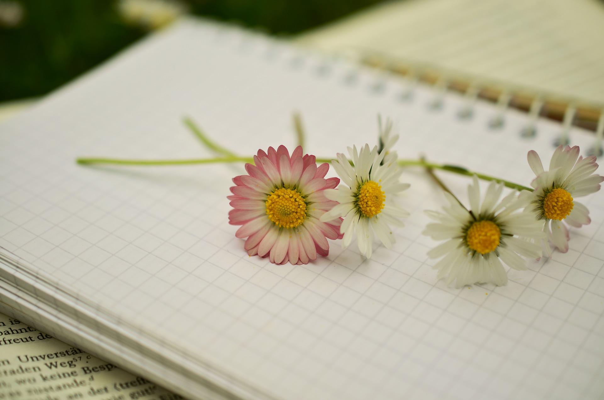 Escribe las motivaciones para hacer una detox