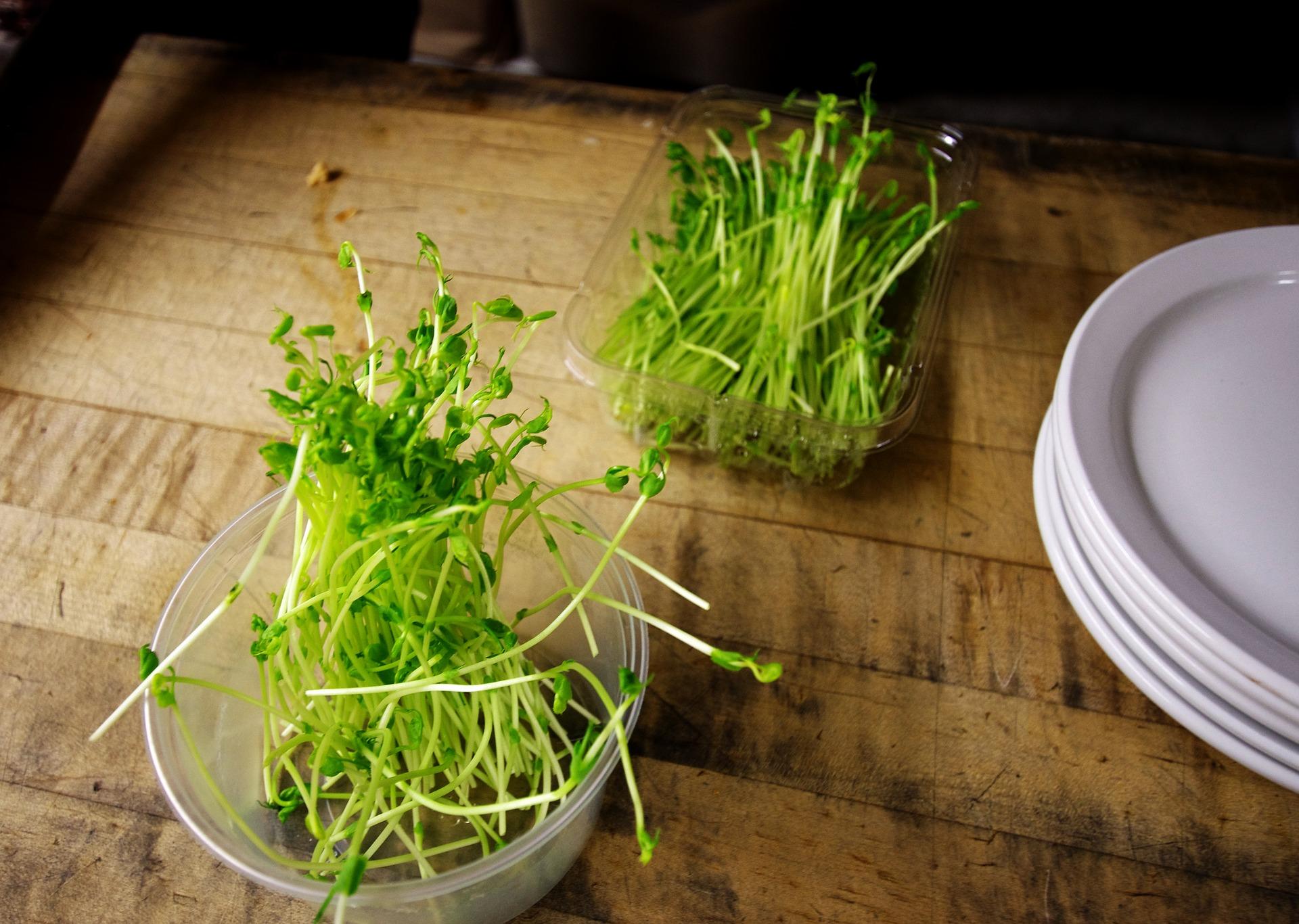 Es fácil hacer germinados en casa