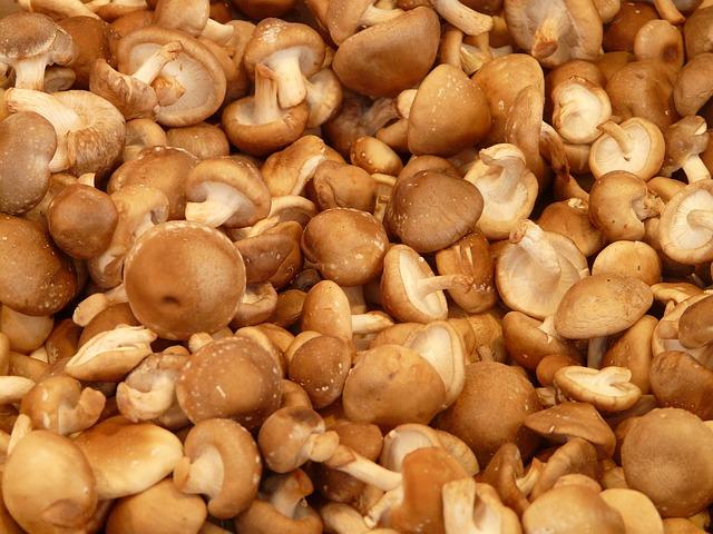 Shiitae proteína vegetal