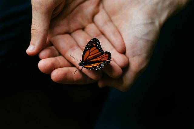 Aceptar esencia como mariposa