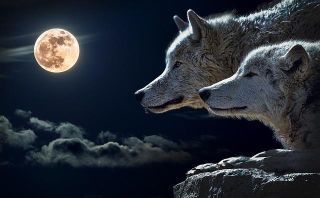 Alimentar lobos apego