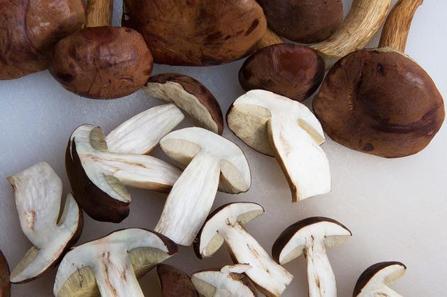 Champiñones proteínas vegetales
