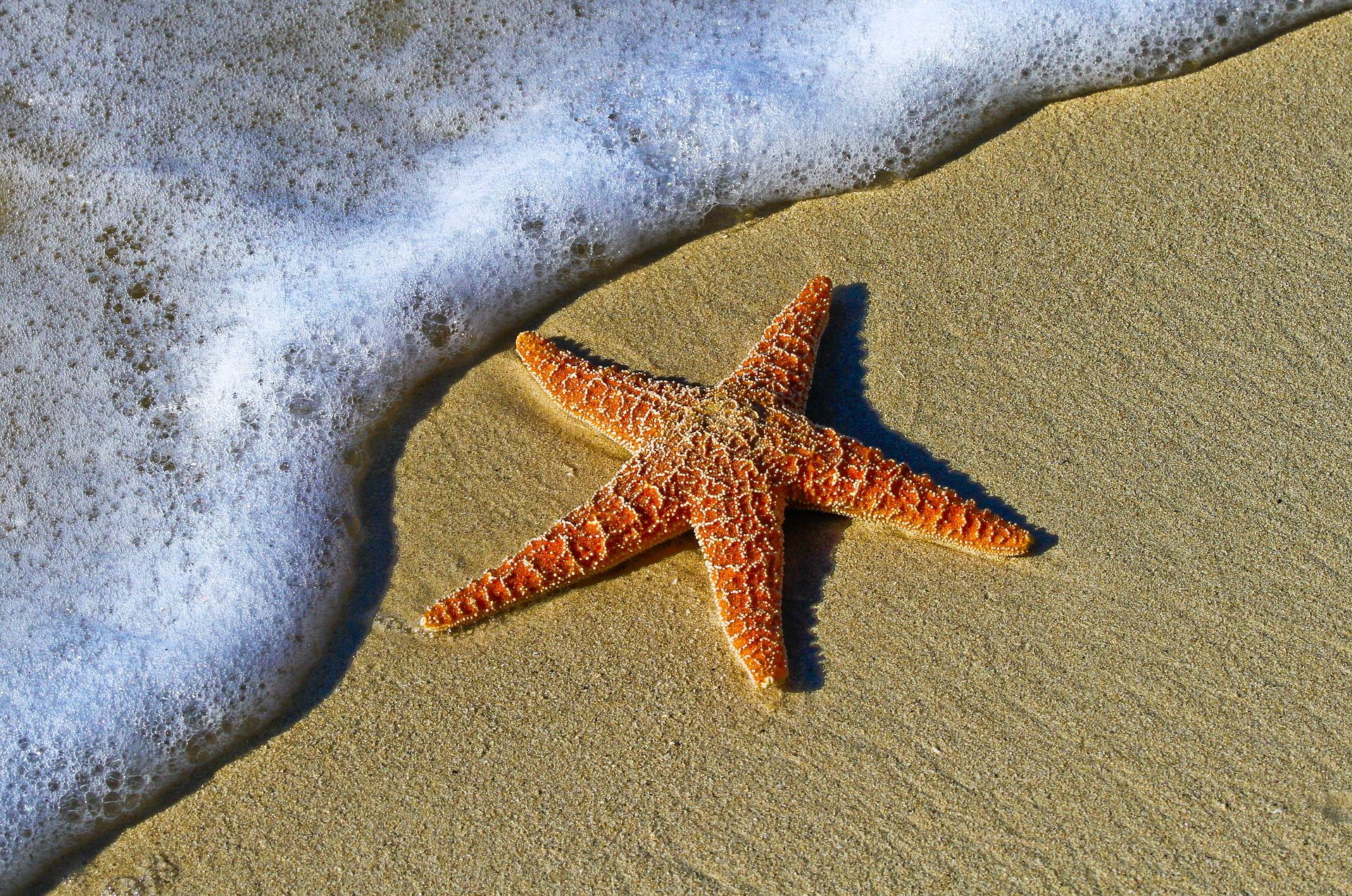 Fabula estrella de mar