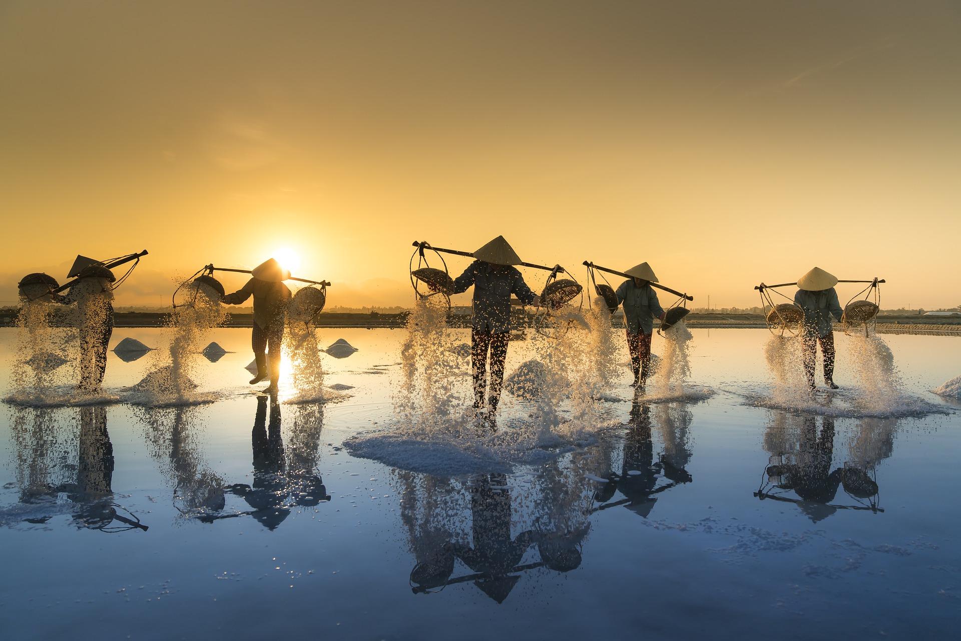Vietnam, campo de sal