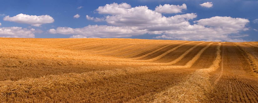 Harvested field, A35, Dorset