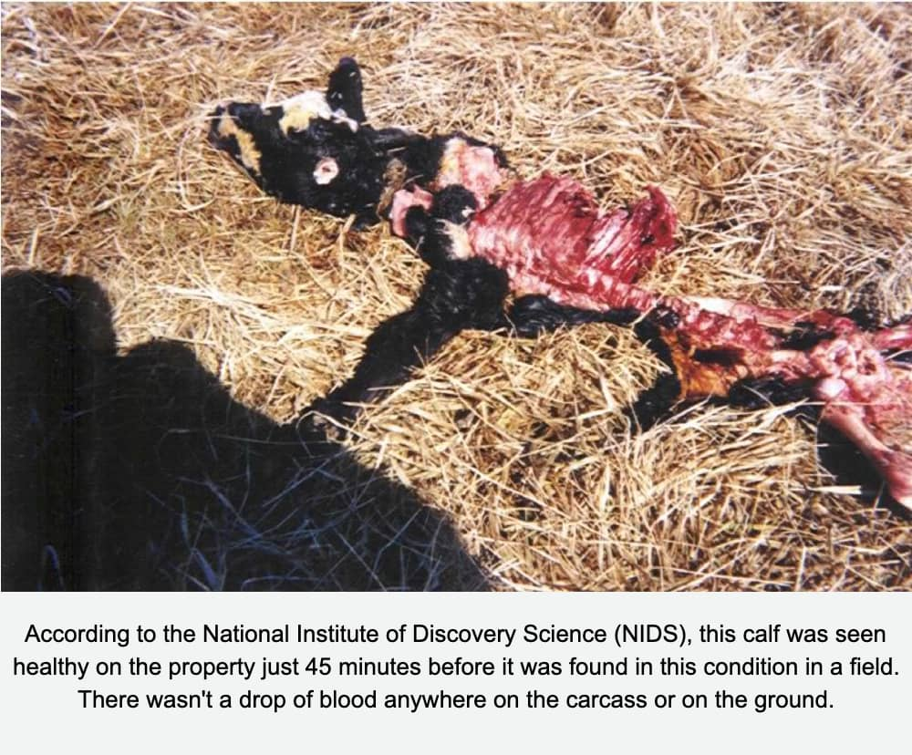 Cattle Mutilation on Skinwalker Ranch