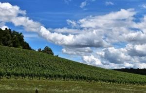 'Verso una viticoltura sostenibile'