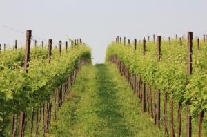 Ad Alba e a Cuneo due incontri rivolti agli agriturismi e alle aziende del vino