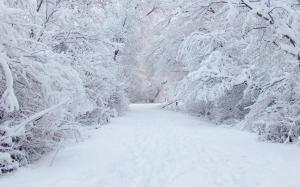 Da domani sera ritornerà la neve sulla Granda