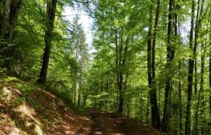 A Mondovì un incontro su pratiche agricole e forestali