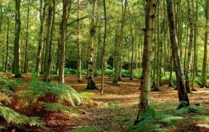 Nella Granda la superficie boschiva cresciuta di mille ettari all'anno dal 2000