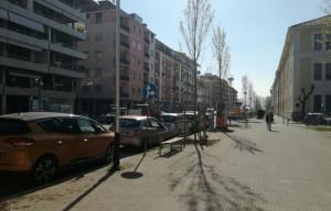 Nuovi alberi in corso Brunet, iniziata la piantumazione (LE FOTO)