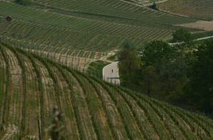 Bra Bra Specialized: 2300 'cuori in fuga' sulle colline delle Langhe e Roero