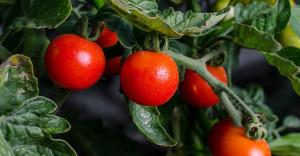 Cia Cuneo sul nuovo regolamento sul biologico: 'Penalizzante per i produttori'