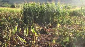 'Danni dei selvatici incalcolabili, servono provvedimenti urgenti'