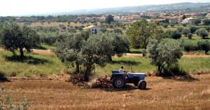 Cia Cuneo: 'Le pensioni agricole sono ancora troppo basse'
