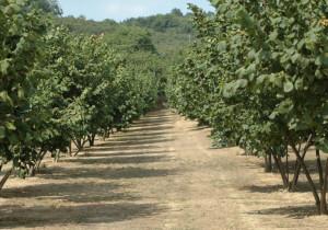 Confagricoltura: 'Il CETA è positivo per tutto l'export agroalimentare subalpino'