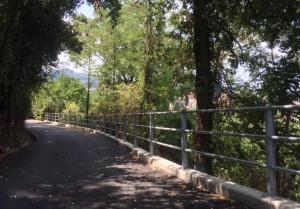 Alba: obbligatorio tagliare rami e piante che sporgono su strade e ferrovie