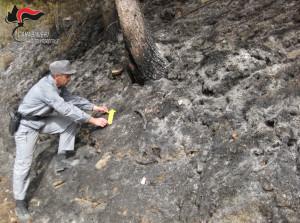Causò incendio che distrusse 6 ettari di bosco: allevatore settantenne rinviato a giudizio (VIDEO)