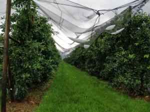 Tromba d'aria e grandine nel Saluzzese, nuovi danni per le coltivazioni
