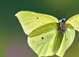 La mostra 'Effetto Farfalla: mondi diversi in una sola vita' alla Casa del Fiume a Cuneo