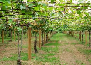 Coldiretti: 'L'eccellente qualità della frutta cuneese va valorizzata dall'intera filiera'