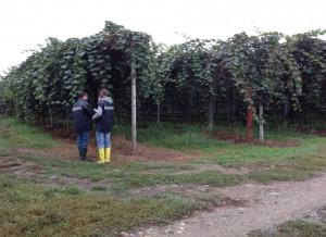 Braccianti africani impiegati in nero, sanzioni ad aziende agricole di Revello e Saluzzo