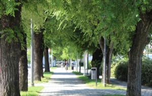 Alba: martedì 18 settembre saranno abbattuti alcuni alberi in Corso Bra