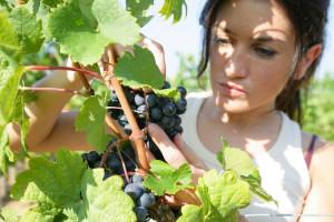 'Donne Impresa' alla rassegna dei frutti della terra a Spinetta