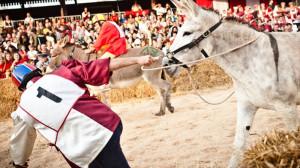 'Non c'è alcun rispetto degli animali in una corsa di asini'
