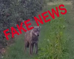 Abbiamo pubblicato una fake news e ce ne scusiamo