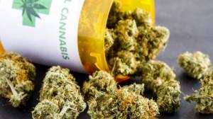 La Regione finanzierà uno studio su efficacia e sicurezza della cannabis terapeutica