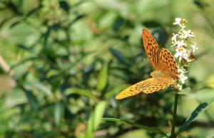 'Uomo e farfalle, una convivenza possibile: conferenza alla Casa del Fiume