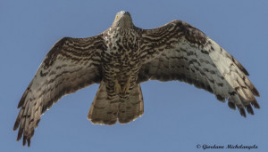 I risultati del 'Progetto Migrans': 8639 uccelli e 18 specie osservati in valle Stura