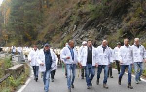 Burocrazia, selvatici e viabilità: l'agricoltura di montagna chiede più attenzione