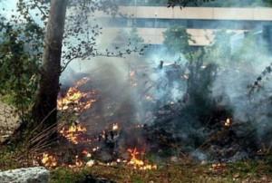 'Non è la bruciatura degli scarti vegetali a causare inquinamento dell'aria'