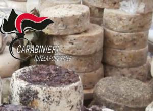 Sequestrate 415 forme di formaggio stagionato alla Fiera del Tartufo