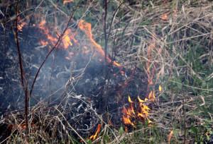 Divieto di bruciatura degli scarti vegetali, Coldiretti chiede una deroga