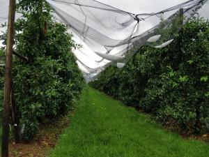 Clima, Coldiretti: 'Siamo di fronte a una evidente tropicalizzazione'