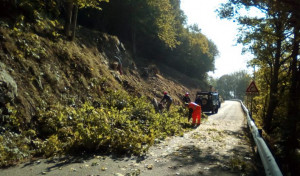 Collaborazione Provincia-Regione per taglio di alberi e arbusti lungo le provinciali nelle valli Po e Varaita