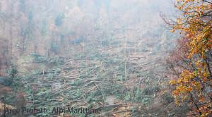 In valle Pesio centinaia di alberi abbattuti dal maltempo