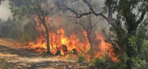 Incendi boschivi: da domani in vigore lo stato di massima pericolosità