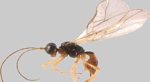 Un nuovo insetto individuato nelle Alpi Marittime